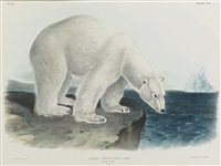 polar bear (plate xci) by john james audubon and john woodhouse audubon