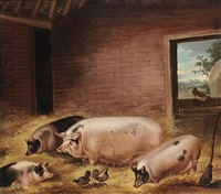 four pigs with chickens in a barn by thomas weaver