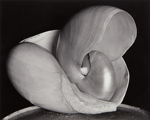 shells by edward weston