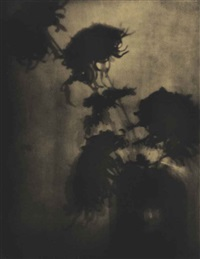 the shadows on the wall, chrysanthemums by adolph de meyer