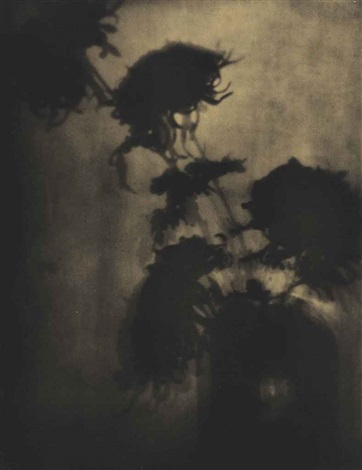 the shadows on the wall chrysanthemums by adolph de meyer