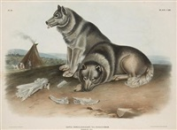 esquimaux dog (from the viviparous quadrupeds of north america) by john woodhouse audubon