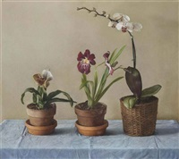 orchids by claudio bravo