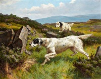 two setters working a moor by alfred duke