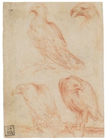 four eagles study by parmigianino