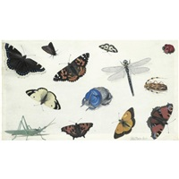 butterflies, moths and beetles, including a blue rhinoceros beetle and a grasshopper (study) by pieter holsteyn the elder