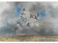 teal in flight by john cyril harrison