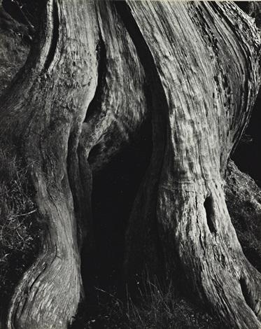 Edward Weston   Cypress, Point Lobos (1930)   Artsy