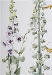 altamont foxgloves by patricia jorgensen
