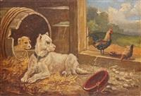 chiens et poules by vincent de vos