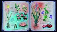 serie de botanica antigua - bulbos i by eduardo gualdoni