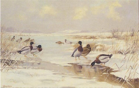 mallard on a frozen lake by wilfred bailey