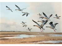 pink-footed geese rising, possibly holkham marsh by john cyril harrison