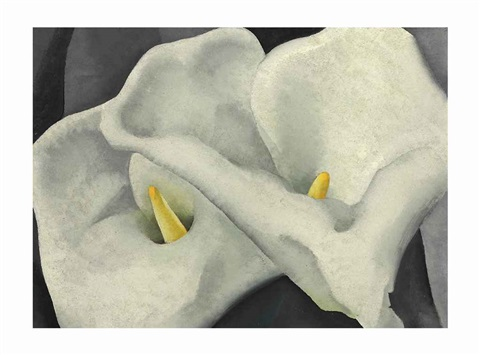 two calla lilies by georgia okeeffe
