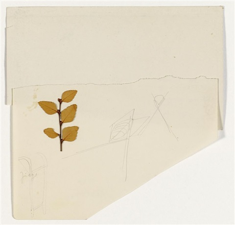nothofagus by joseph beuys