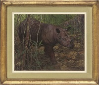 a rhino in a forest by matthew hillier
