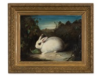 white rabbit by david de coninck