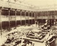 galerie de zoologie du museum d'histoire naturelle, les mammifères, paris by adolphus pepper