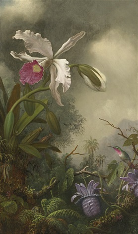 white orchid and hummingbird by martin johnson heade