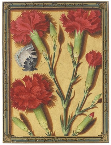 clove pinks and a small tortoiseshell butterfly by jacques le moyne de morgues