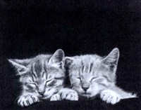 deux chatons by ylla