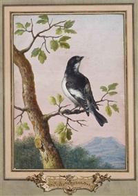 gobemouche noir sur une branche de chêne by christoph ludwig agricola