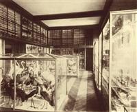 galerie de zoologie du museum d'histoire naturelle, les oiseaux, paris by adolphus pepper