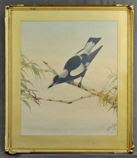 magpie chasing a caterpillar by neville henry peniston cayley