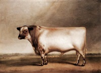 ormsby, a prize bull, bred by mr william cropper of laceby by bennett hubbard