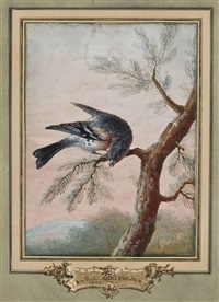 un pinson du nord, dit fringilla montifringilla by christoph ludwig agricola