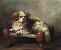 the blenheim cavalier king charles spaniel 'llasa' lying on a stool by florence jay
