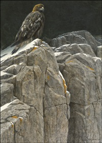 upon the crag - golden eagle by robert bateman