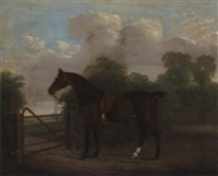 a saddled bay hunter tethered to a gate, in a wooded landscape by clifton tomson