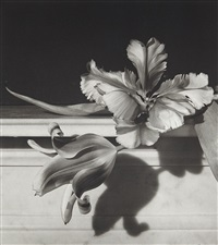 tulips, oyster bay, new york by horst p. horst