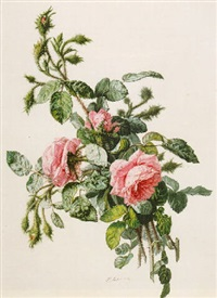 study of wild roses by simon saint-jean