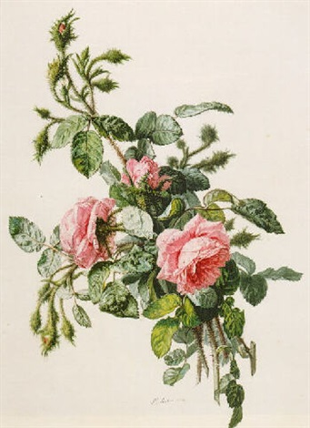 study of wild roses by simon saint jean