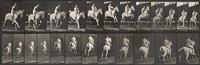 equestrian (from animal locomotion, plate 647) by eadweard muybridge