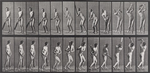 animal locomotion pl 391 by eadweard muybridge