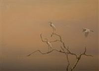 egretts by kim donaldson