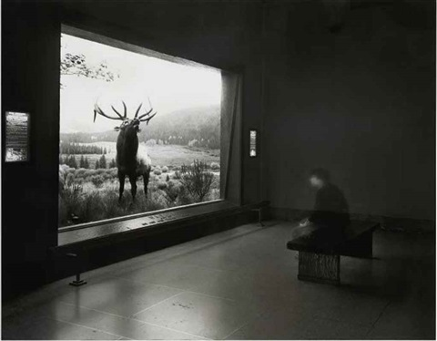 self portrait contemplating wapiti by matthew pillsbury