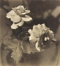 roses by jean-marie auradon
