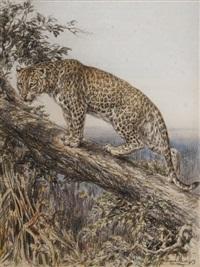 panthère sur un tronc d'arbre by robert morley