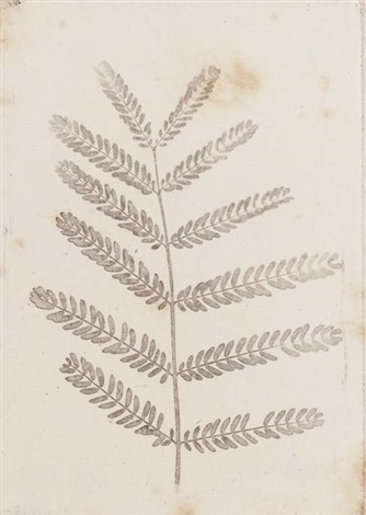 study of foliage 4 others 5 works various sizes by william henry fox talbot
