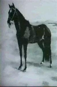 caballo by juan bautista diógenes hequet