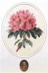 study of a rhododendron by valentine bartholomew