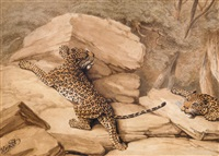 a pair of leopards by william samuel howitt