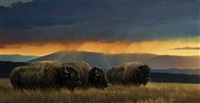 montana skies by nancy glazier