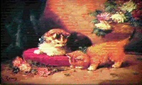 chatons jouant by m. remy