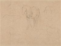 horse studies by edgar degas