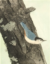 white-breasted nuthatch by maurice r. bebb
